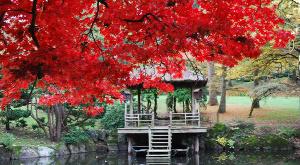 jardin japonais du parc oriental